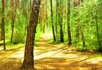 En pleine forêt