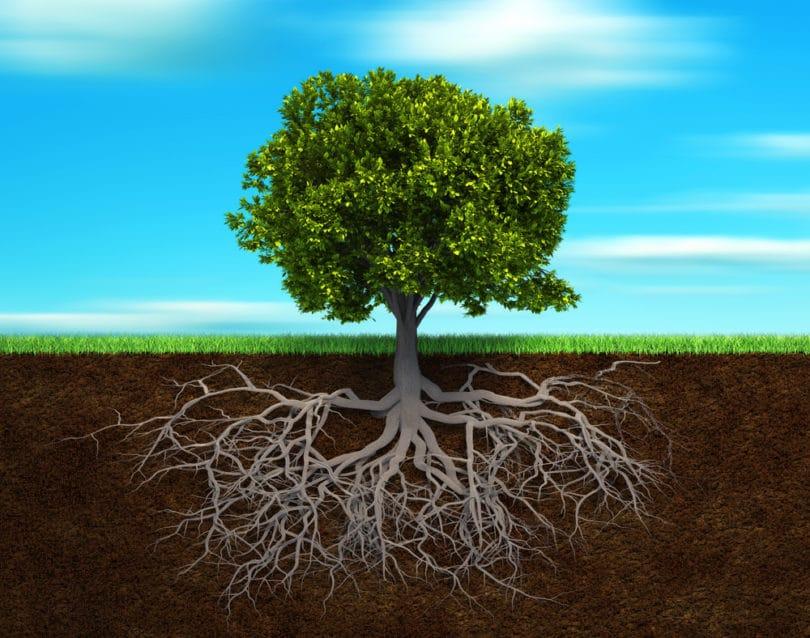 racines-chez-soi