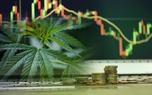 plant cannabis investissements