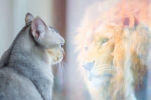 miroir pouvoir Kiyosaki